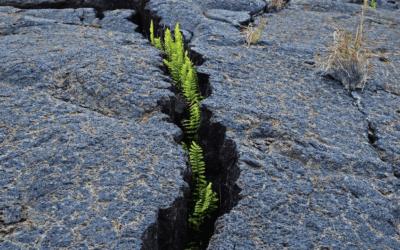 Aziende resilienti e antifragili: cosa c'è da sapere